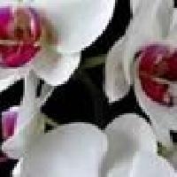 Гулдер салон Орхидея, Магазин цветов, taldykorgan