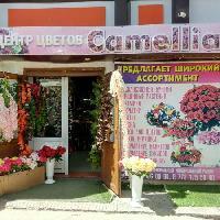 Центр цветов Camellia, Центр цветов, baykonur