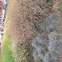 Травы Юга, Ландшафтный дизайн , sochi